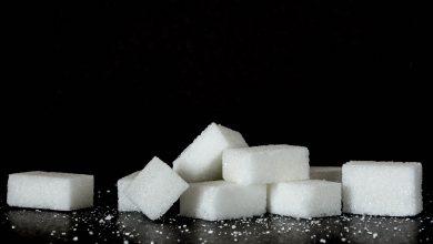 강아지 설탕