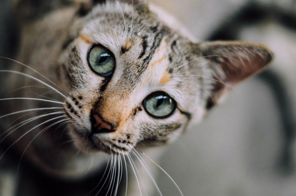 고양이 눈 색깔