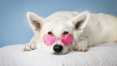시각 장애 강아지