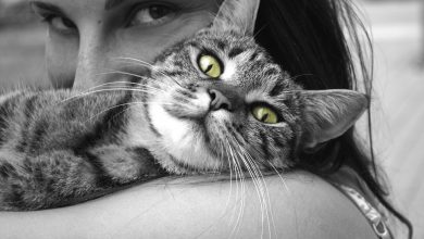 사랑받고 있는 고양이