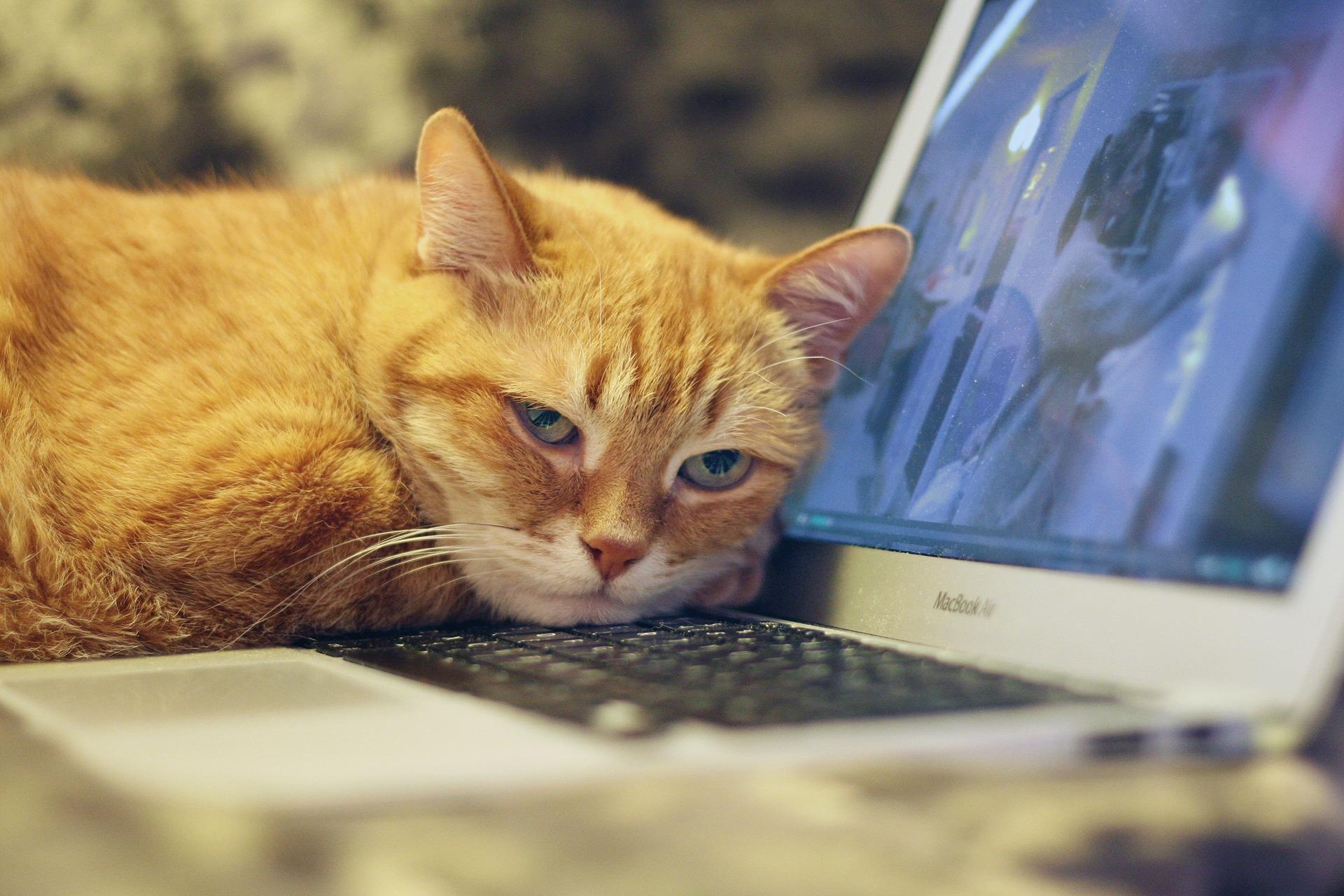 고양이 키보드 위