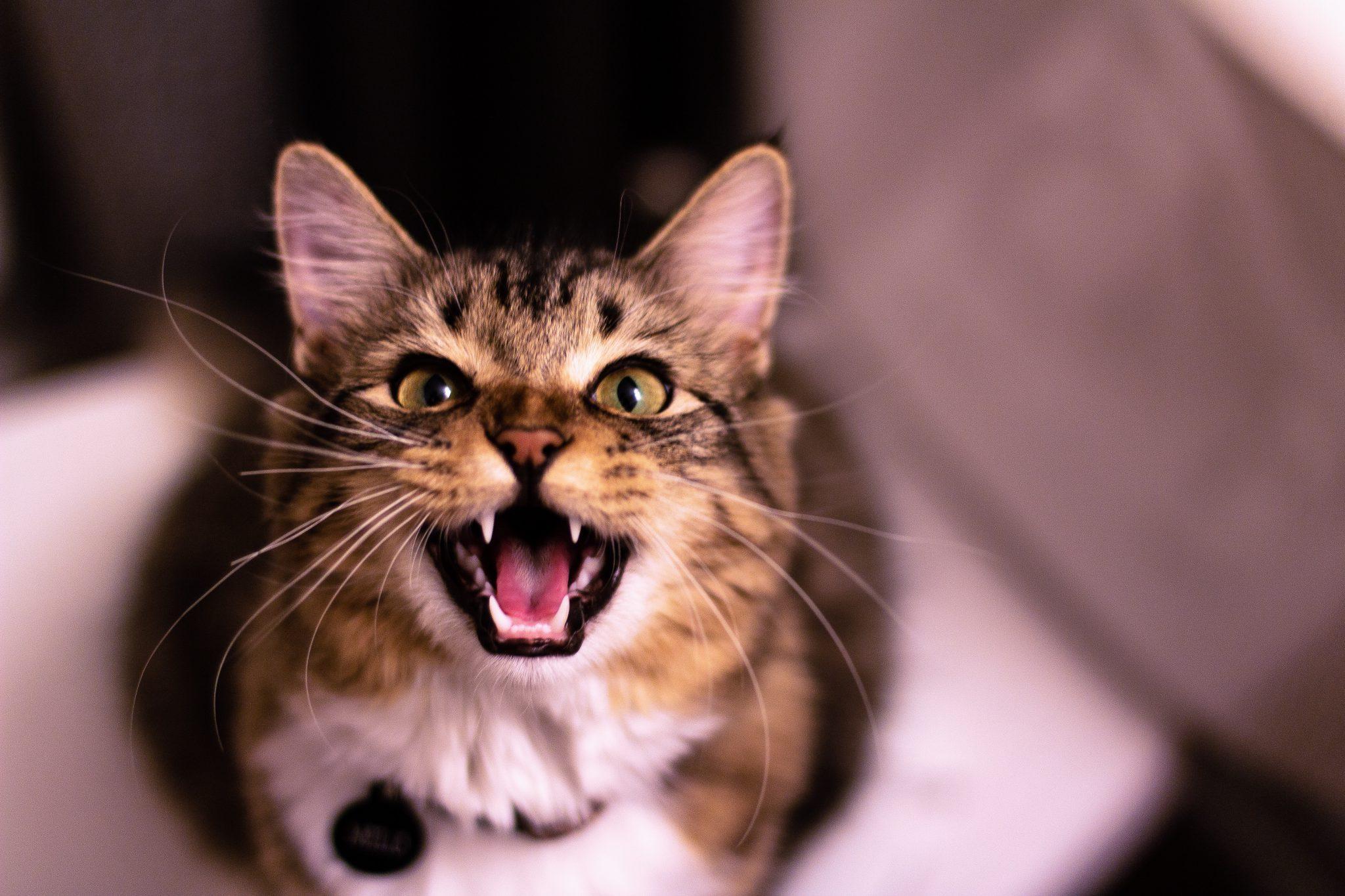 고양이 무는 버릇