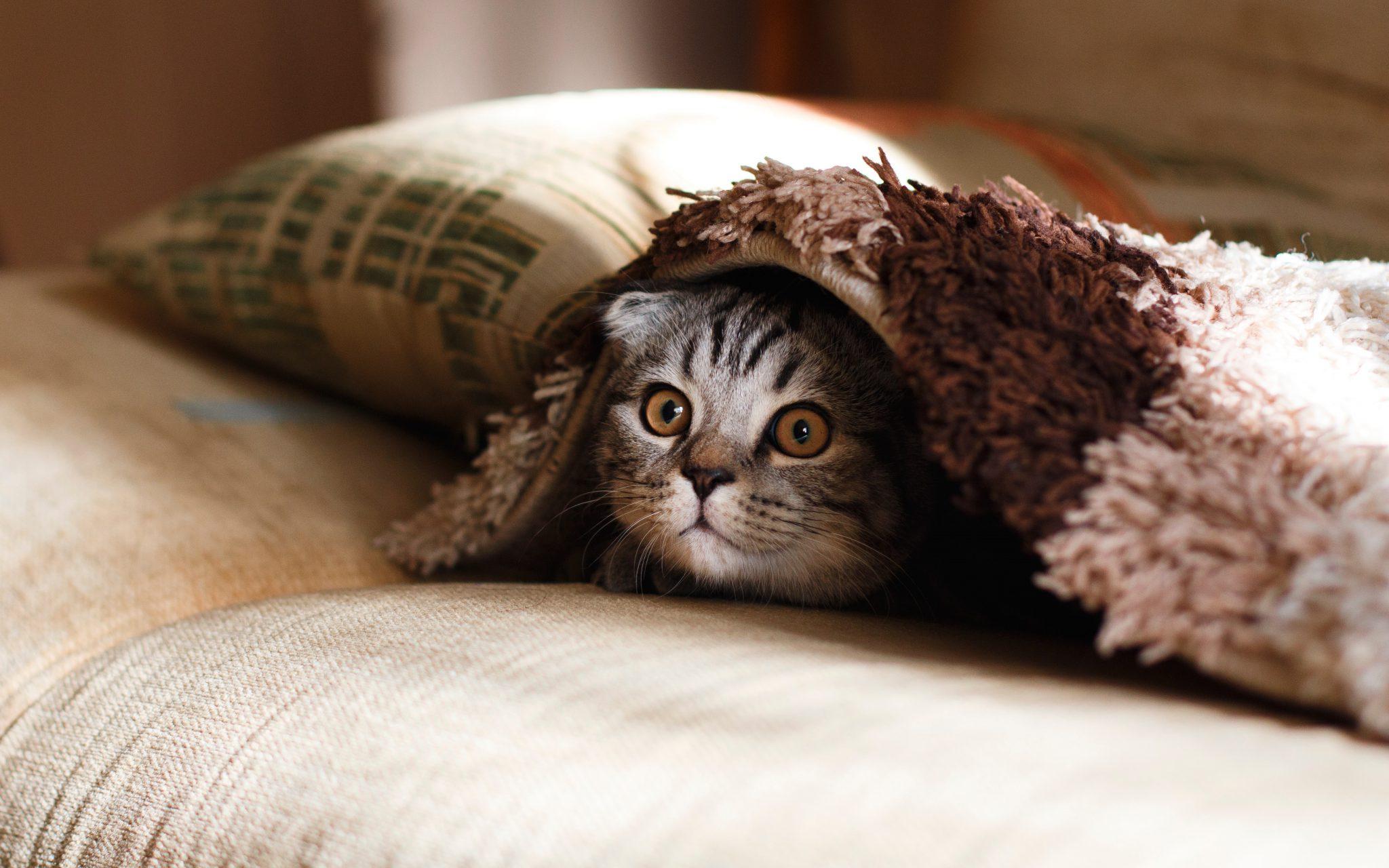 고양이 낯가림