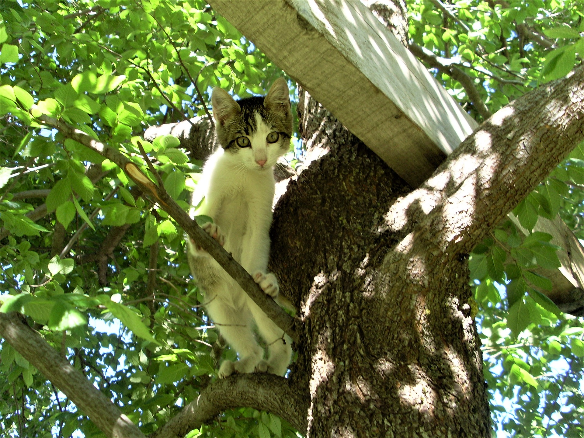 고양이 높은 곳