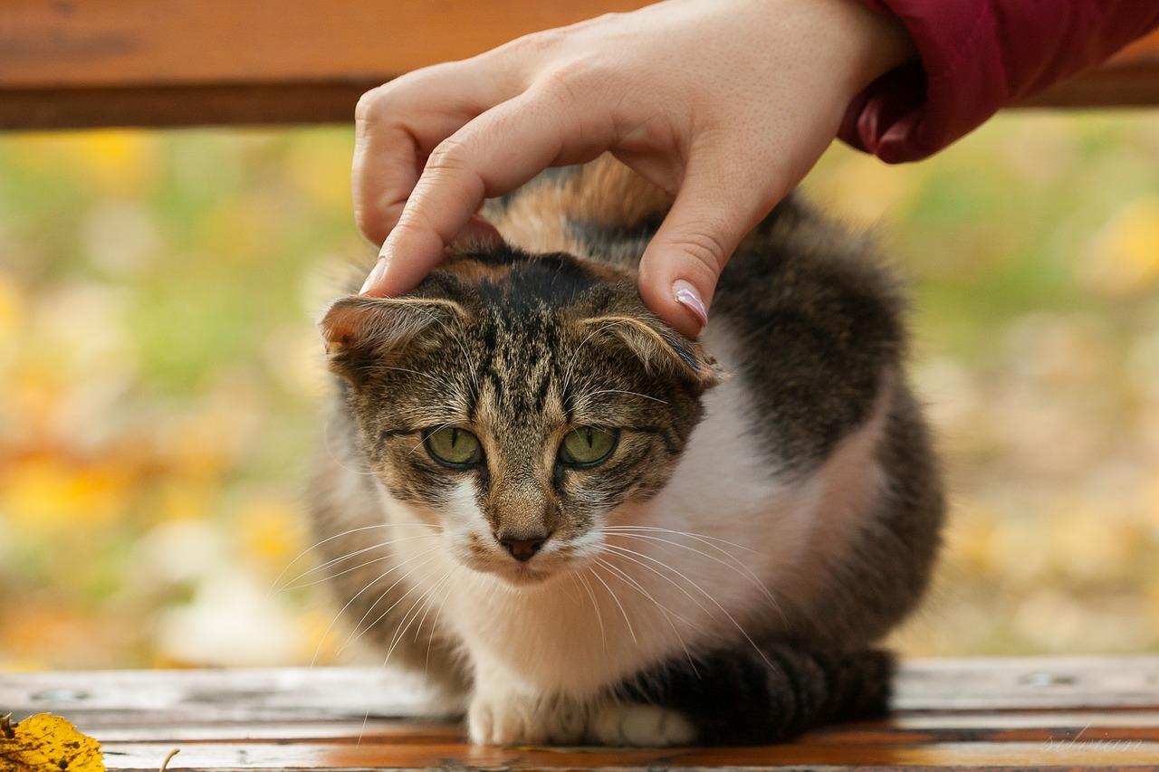 고양이 어깨 뭉침