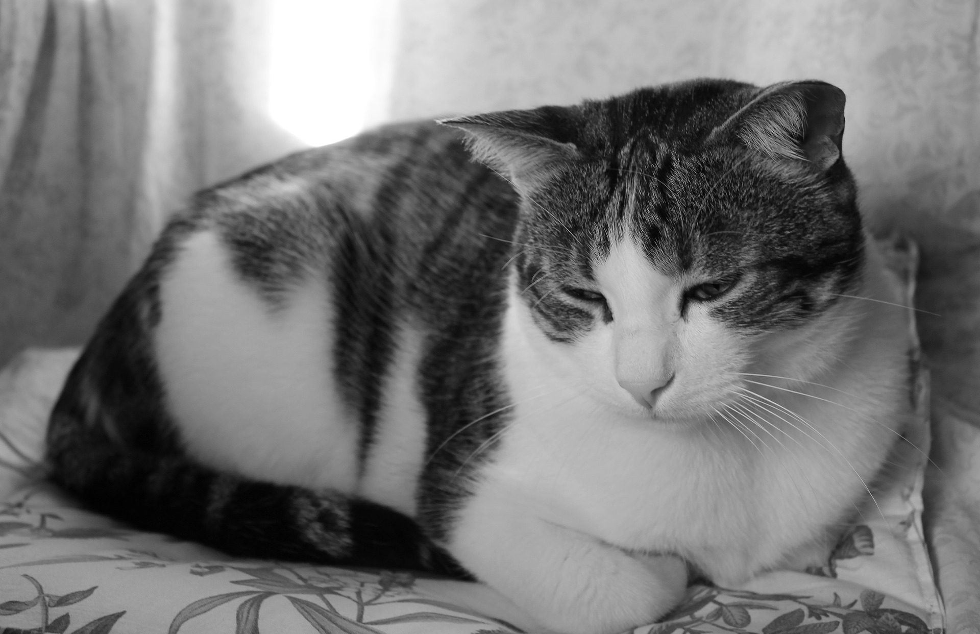 고양이 슬픔