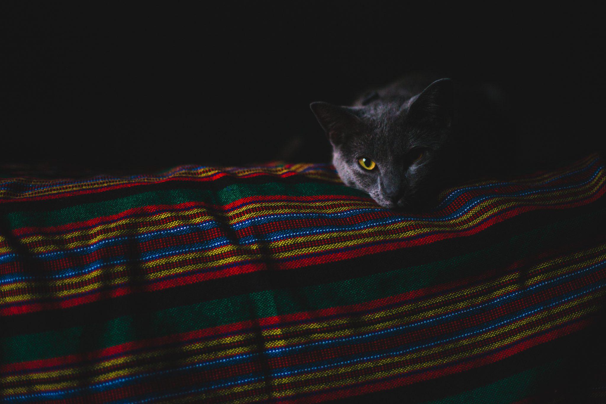 집사 쳐다보는 고양이