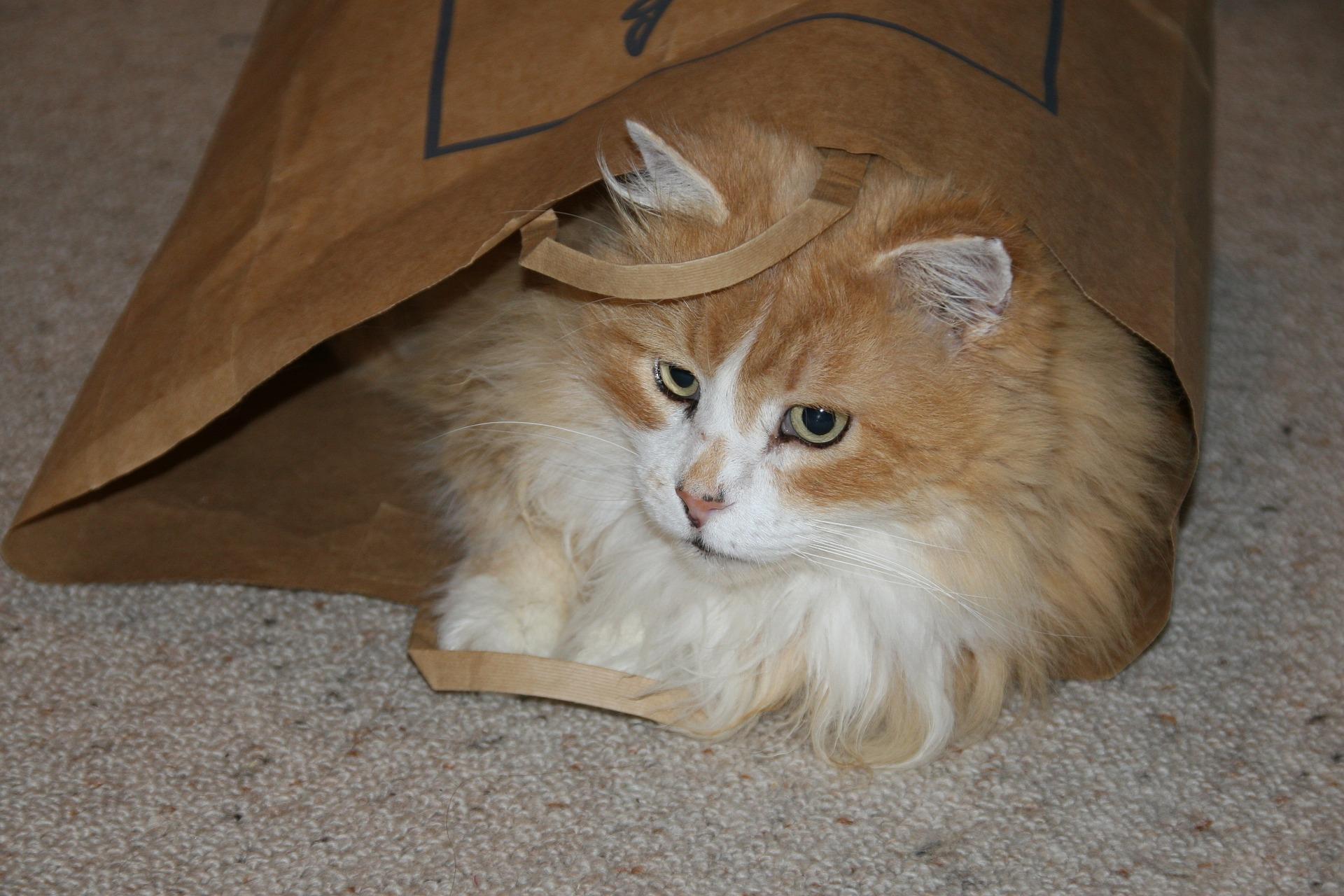 고양이 봉투