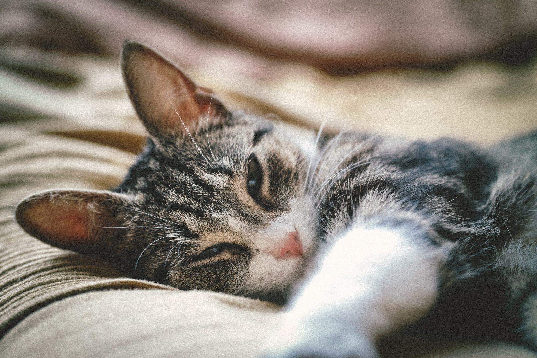 고양이 자는 척