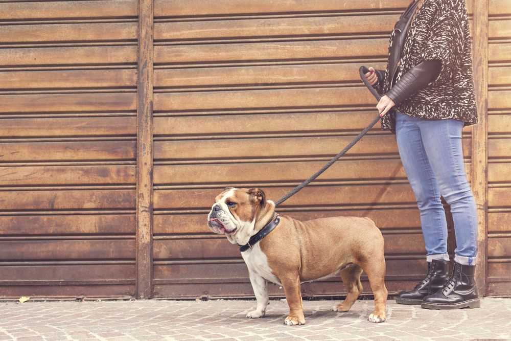 강아지 산책줄