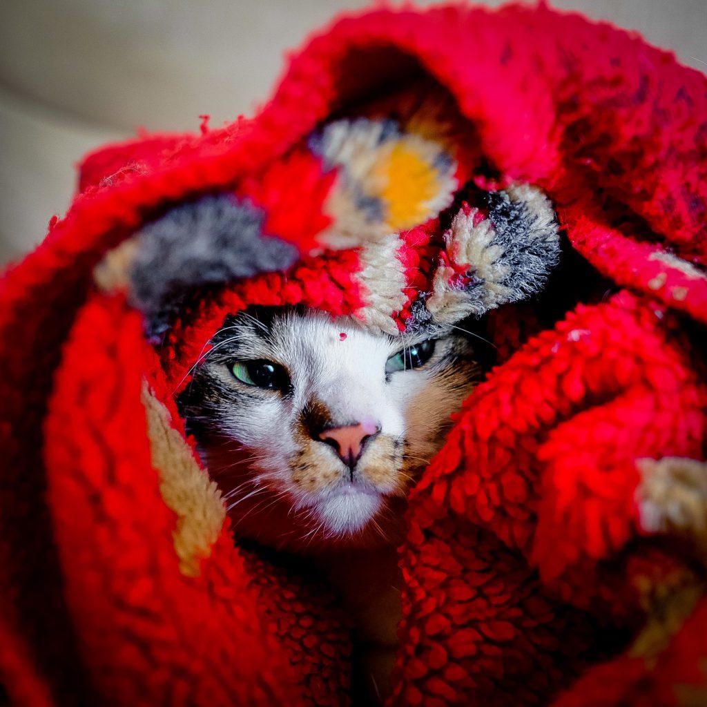 고양이 추위