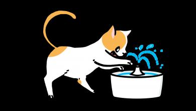 고양이 음수량