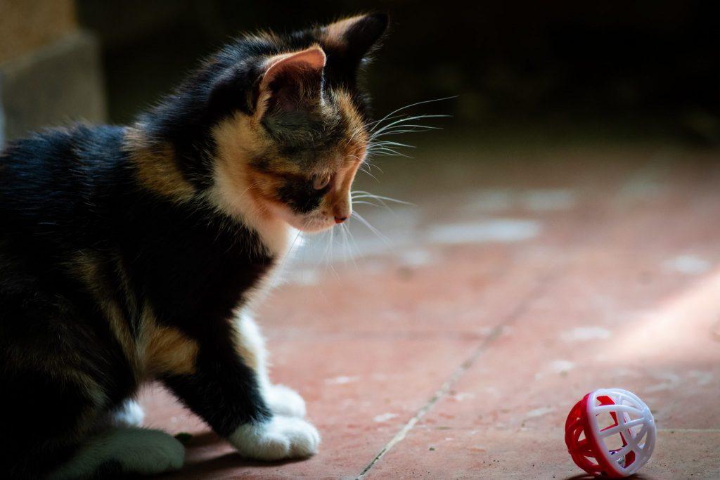 고양이 놀이