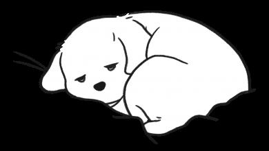 강아지 엄살 혹은 꾀병