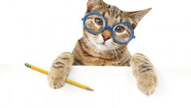 고양이 지능