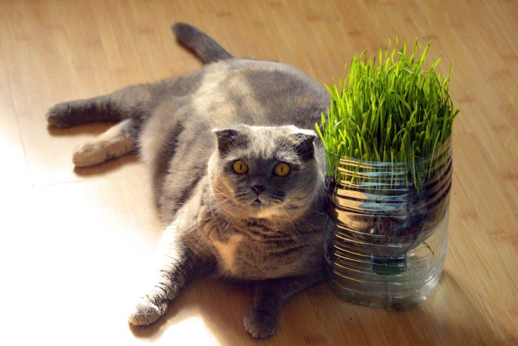 고양이 비만
