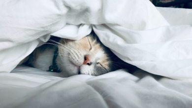 고양이 카밍시그널