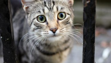 고양이 고마움 표현