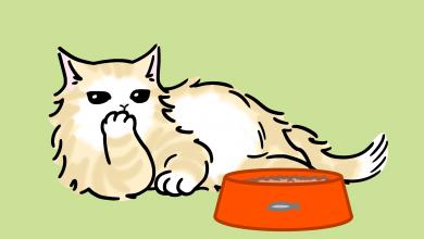 고양이 밥 남기는