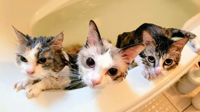 고양이 목욕