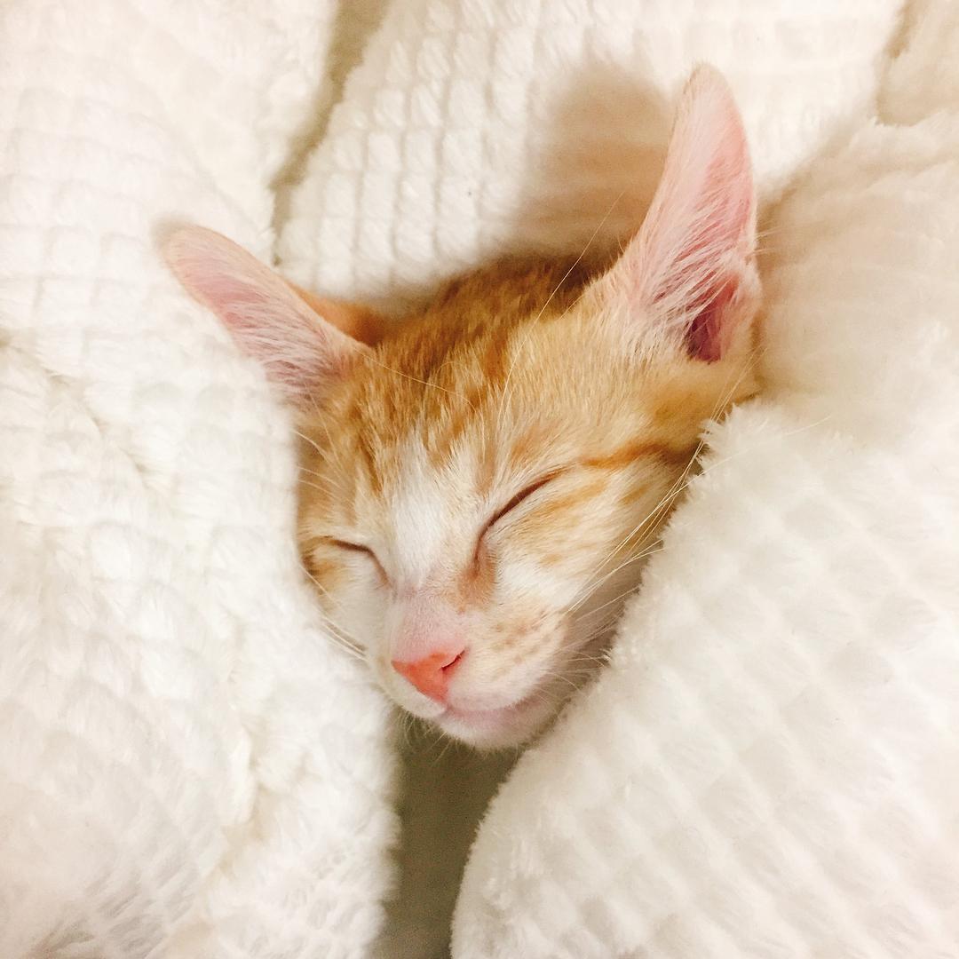 고양이 같이 자는