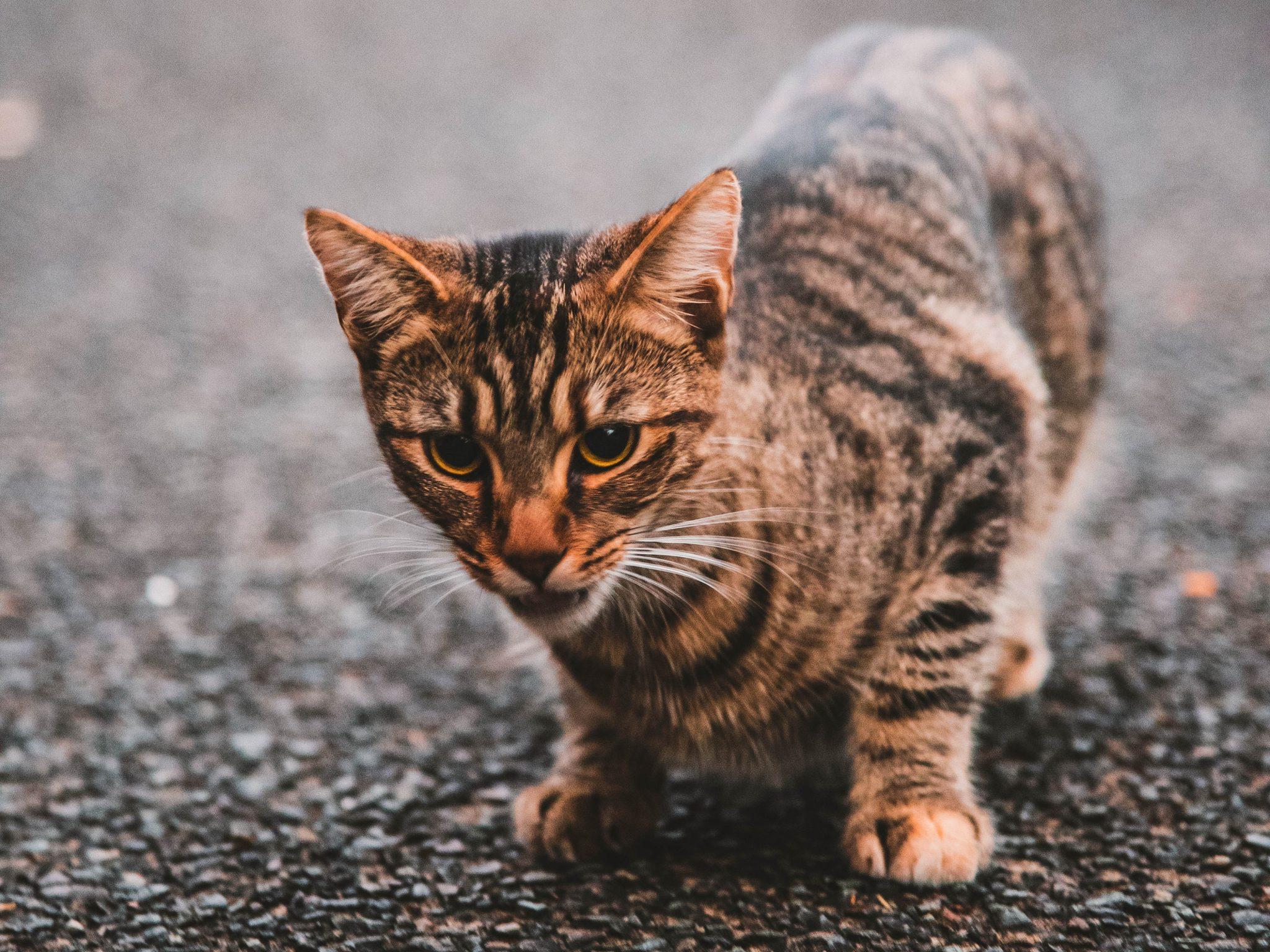 고양이 도망