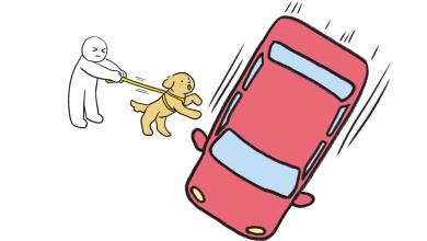 강아지가 달리는 자동차를