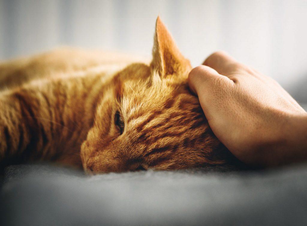 고양이 죽기 전