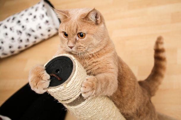 고양이 부끄럼
