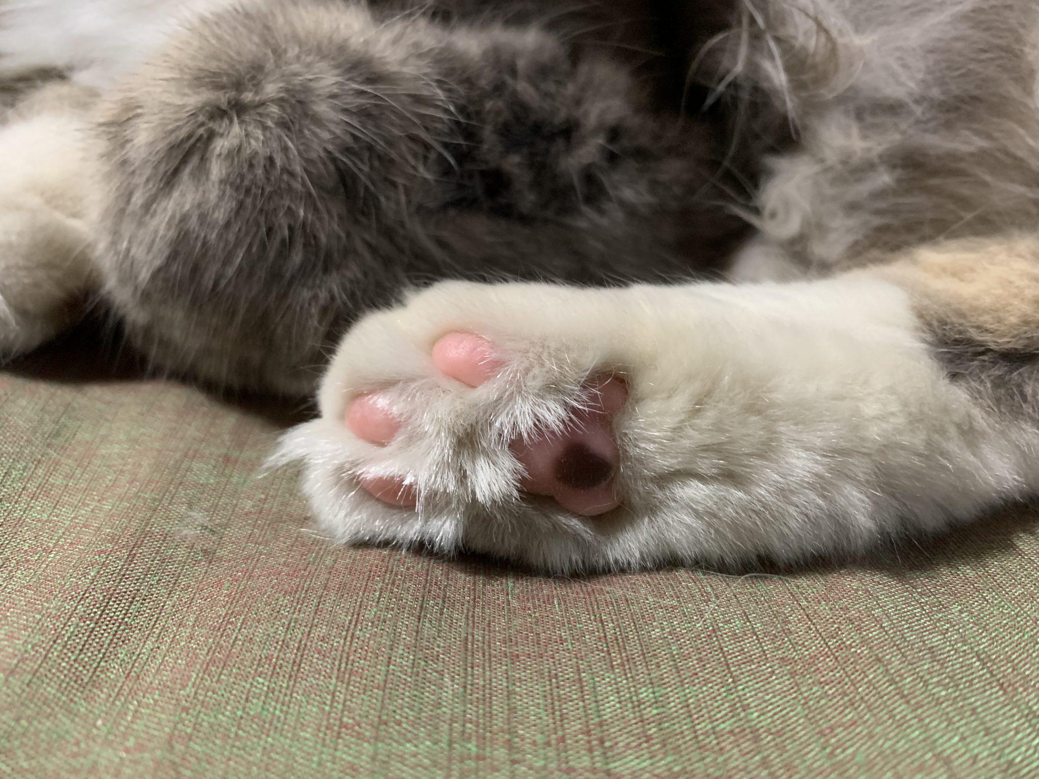 고양이 젤리