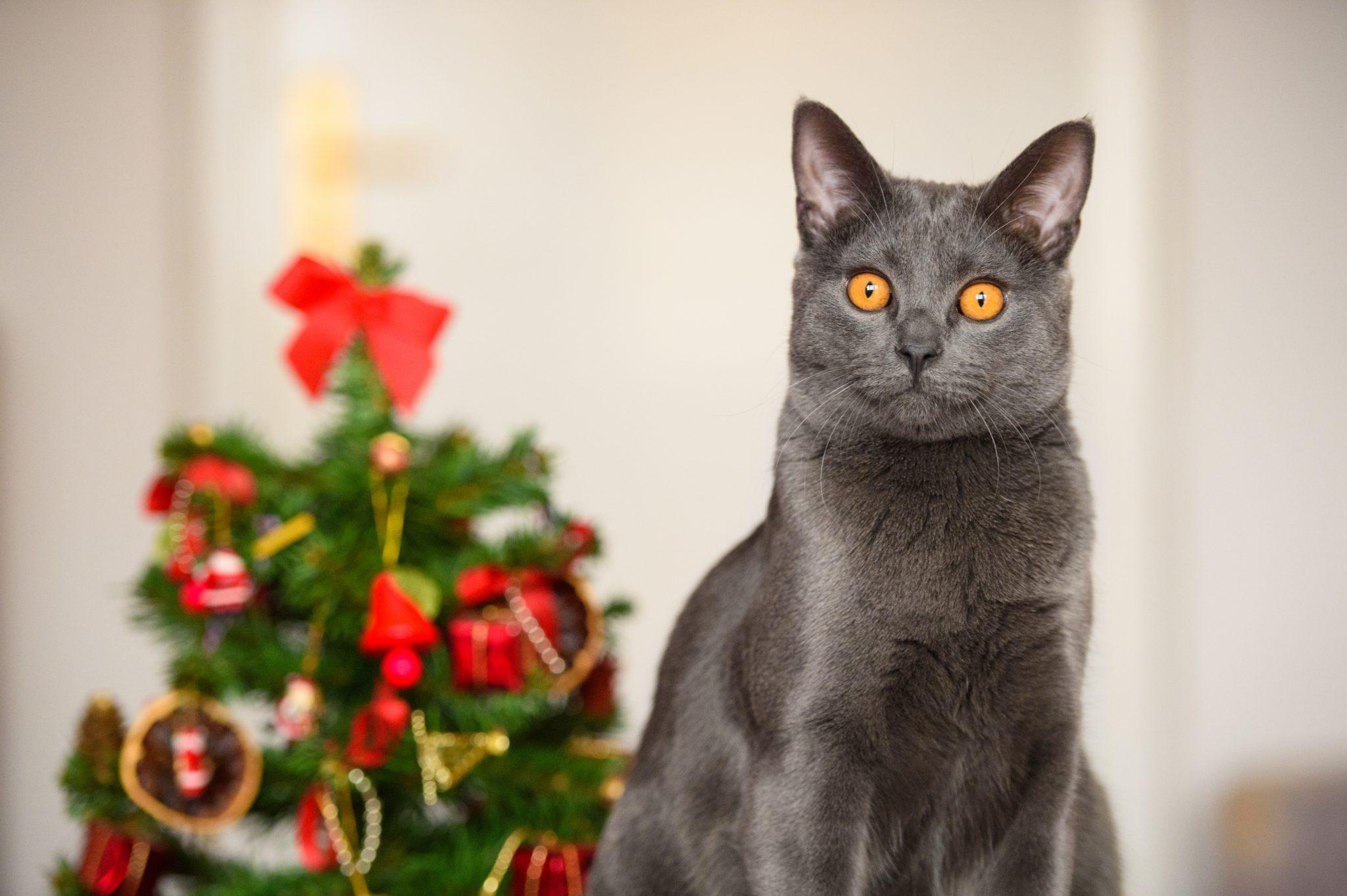 고양이 크리스마스