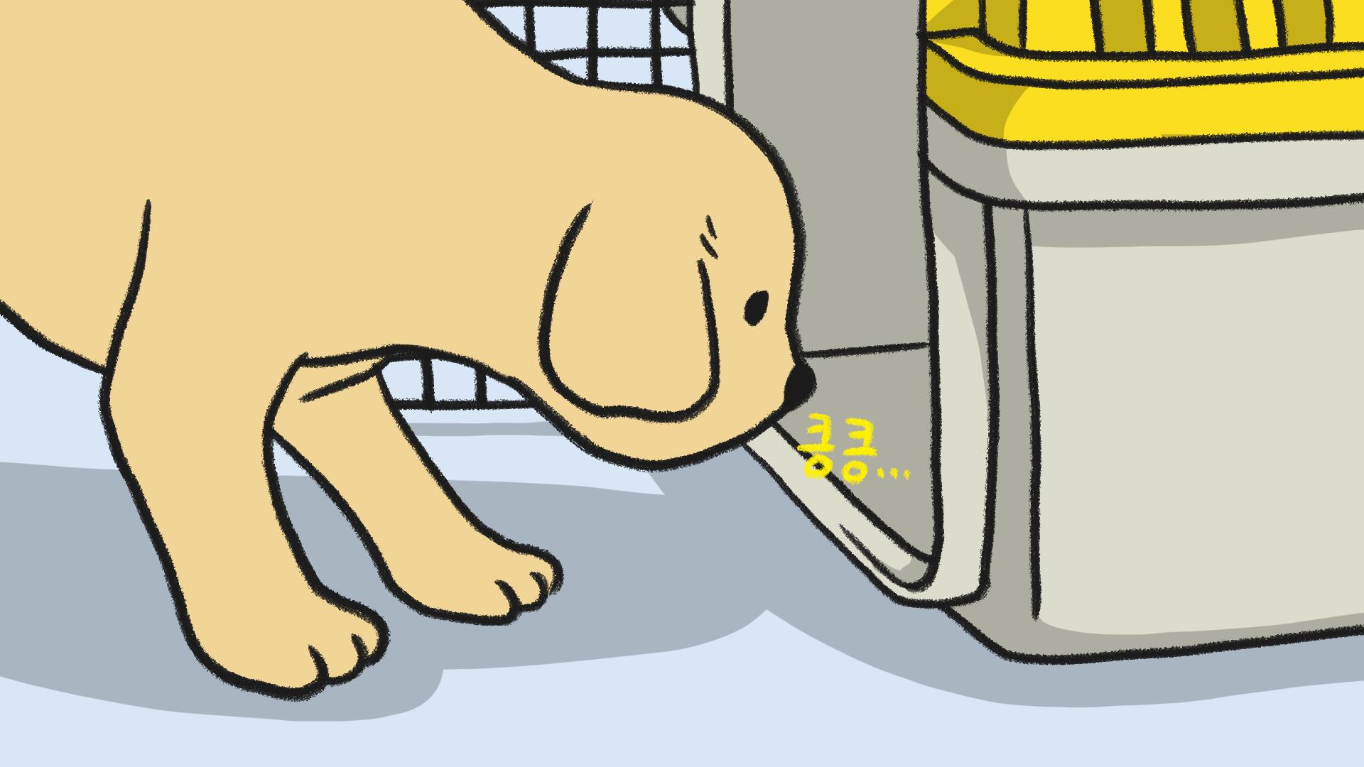 강아지 켄넬 훈련 (하우스 훈련)