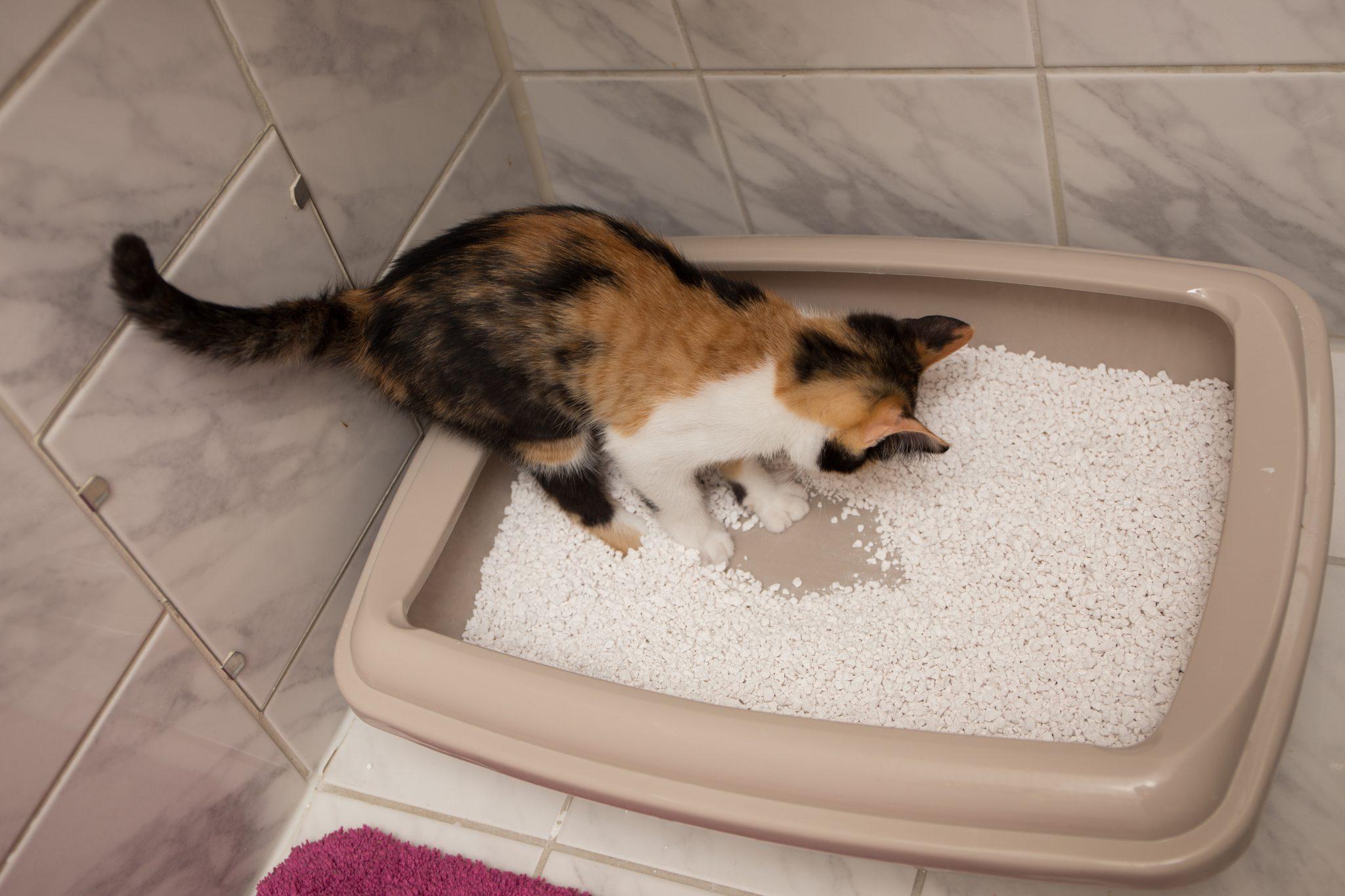 고양이 사막화