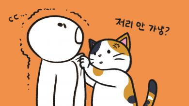 고양이 사춘기