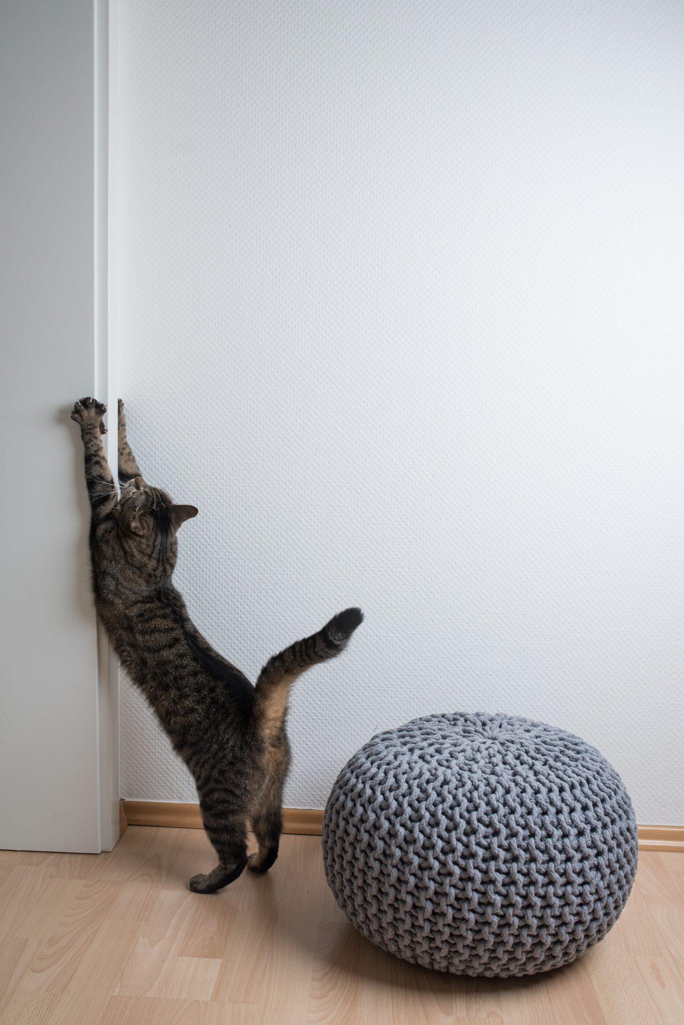 고양이 벽지