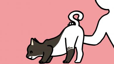 고양이 궁디팡팡