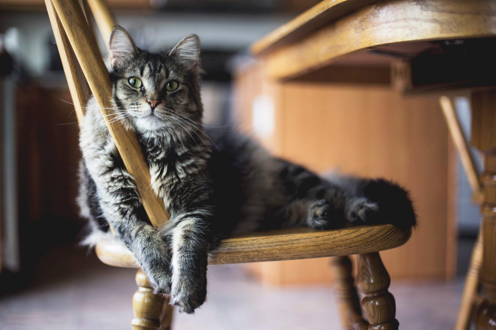 고양이 집사 자리