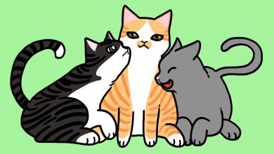 고양이 성격