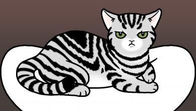 고양이 독점욕