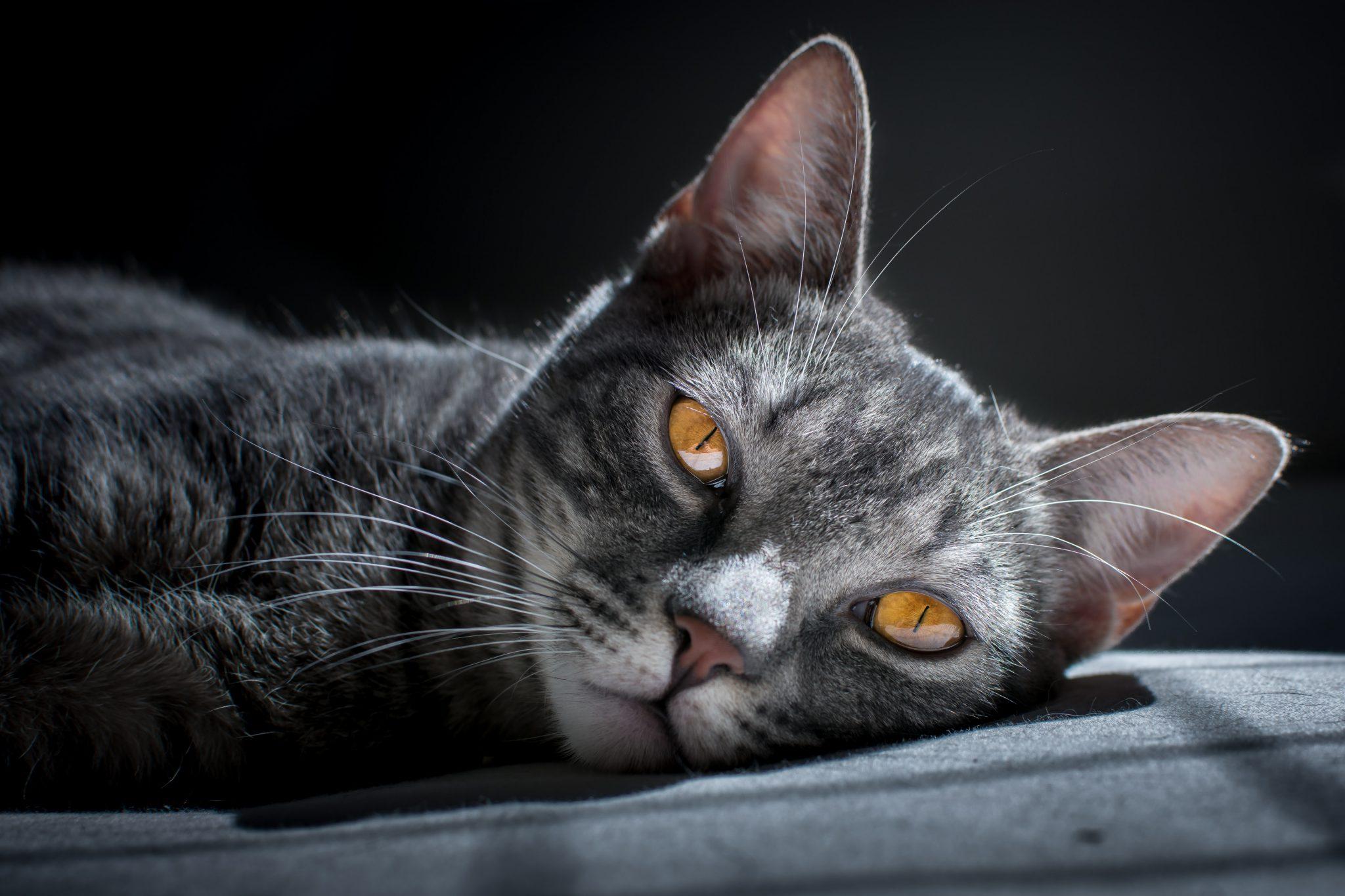 고양이 권태기