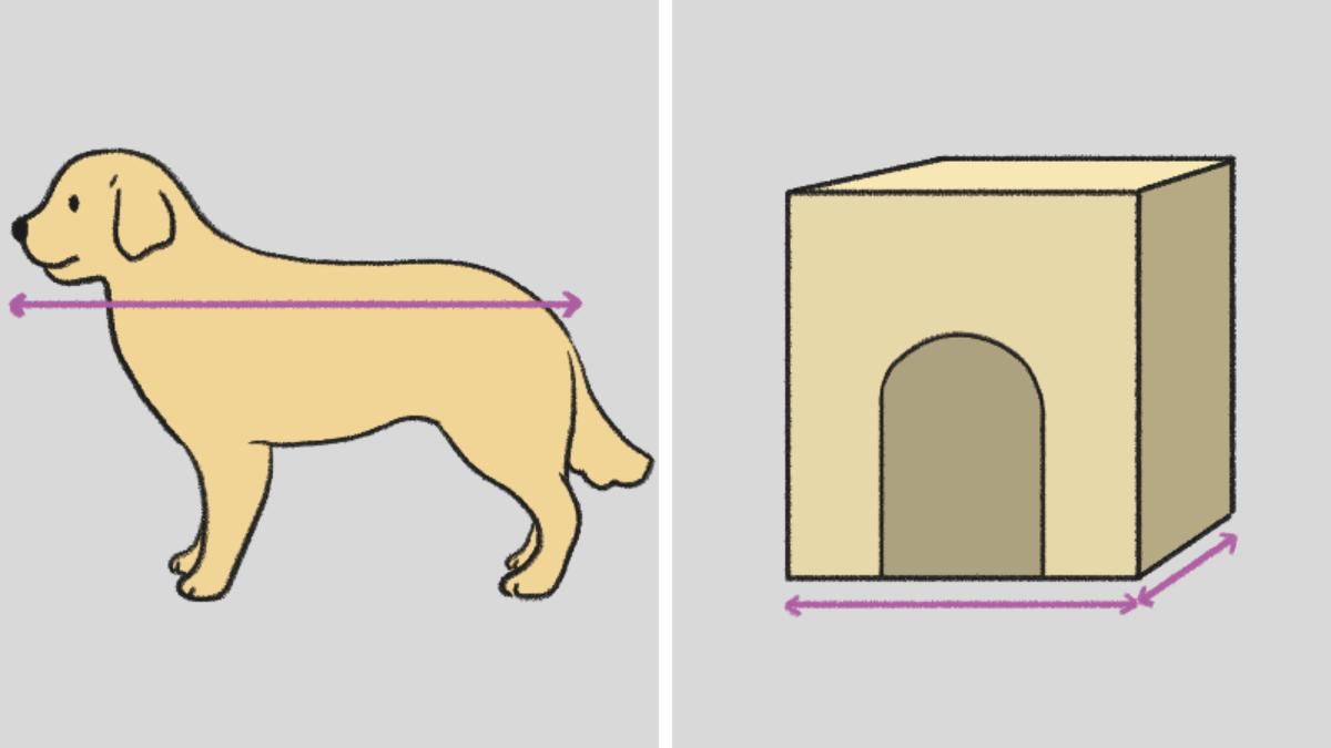 강아지 집 고르기