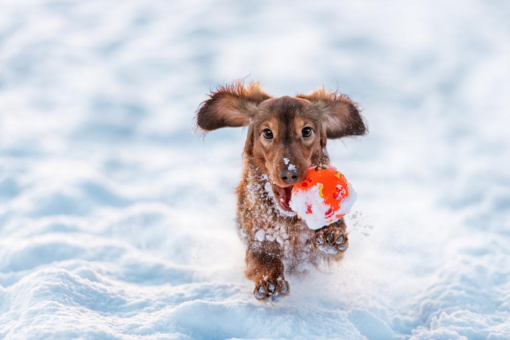 강아지 겨울