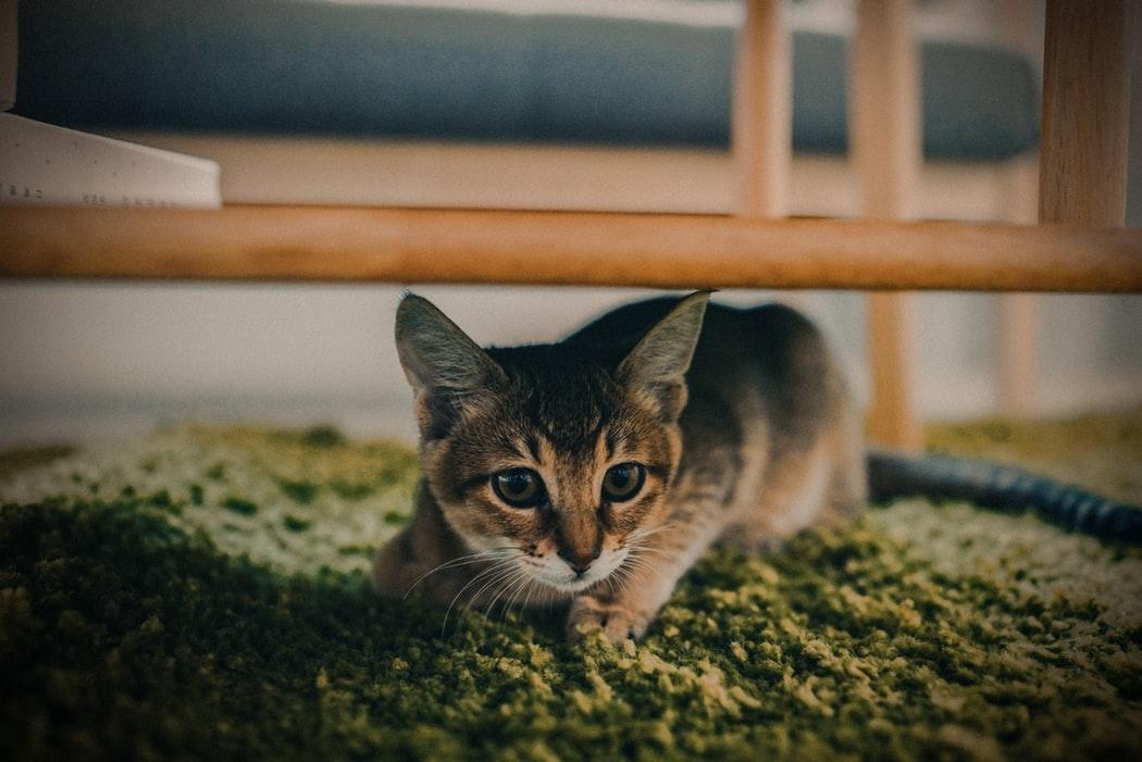 고양이  숨고