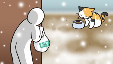 길고양이 밥 주기