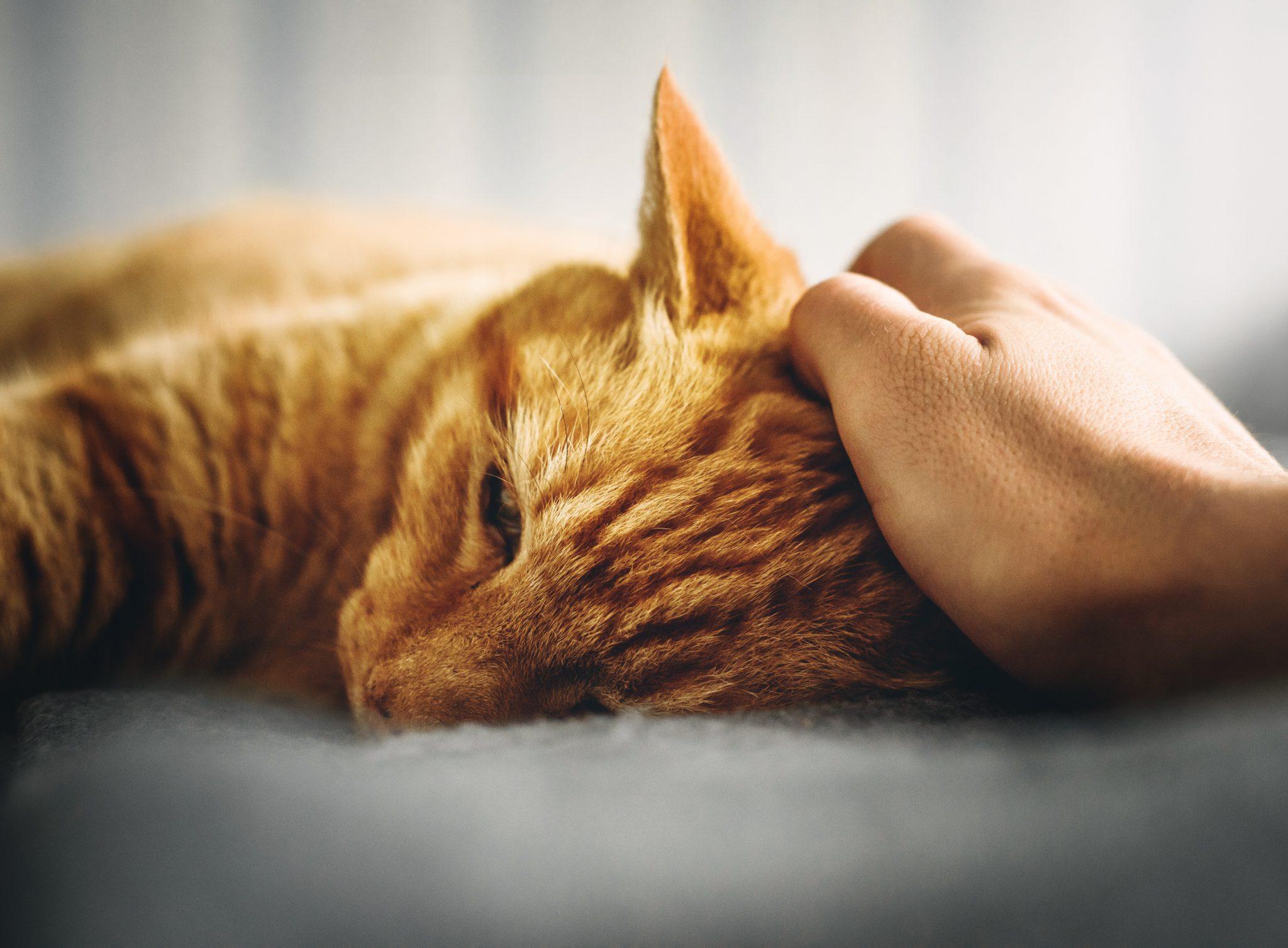 고양이 애정결핍