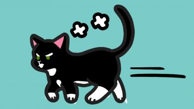 고양이가 싫어하는 색깔