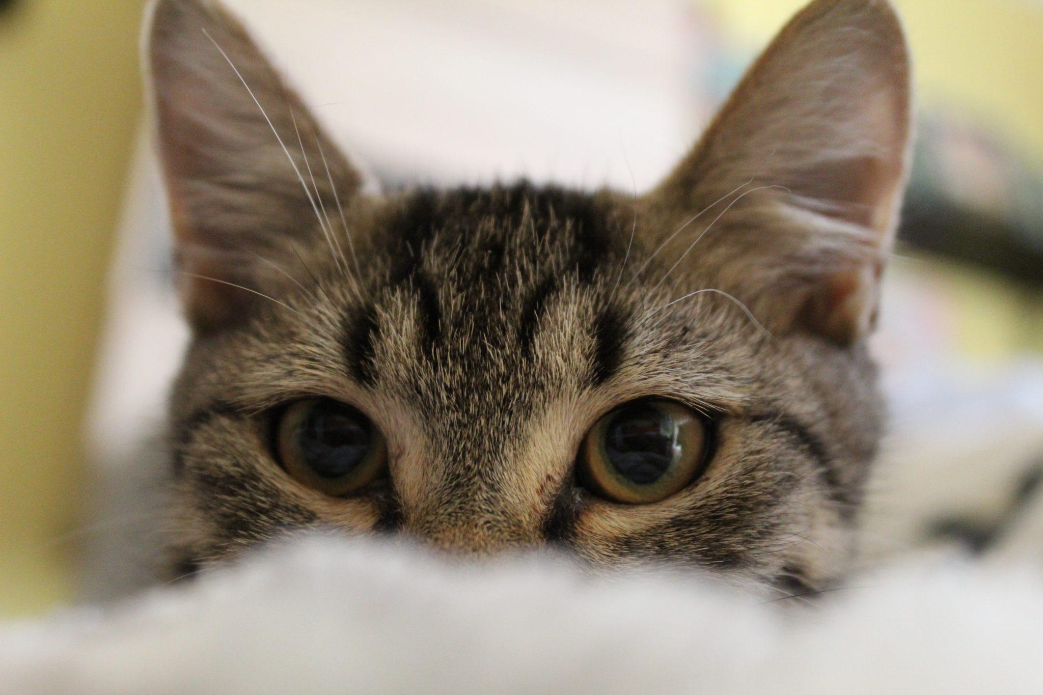 고양이 집사 귀가