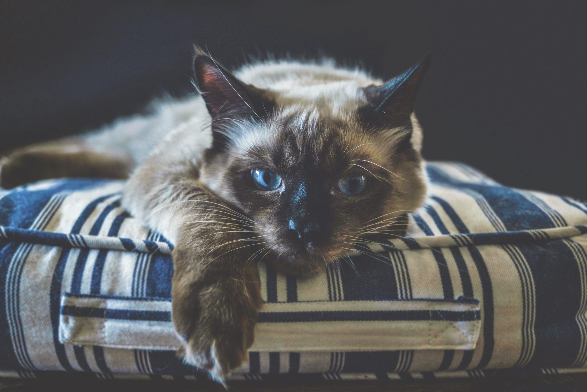 고양이 따로 재우는