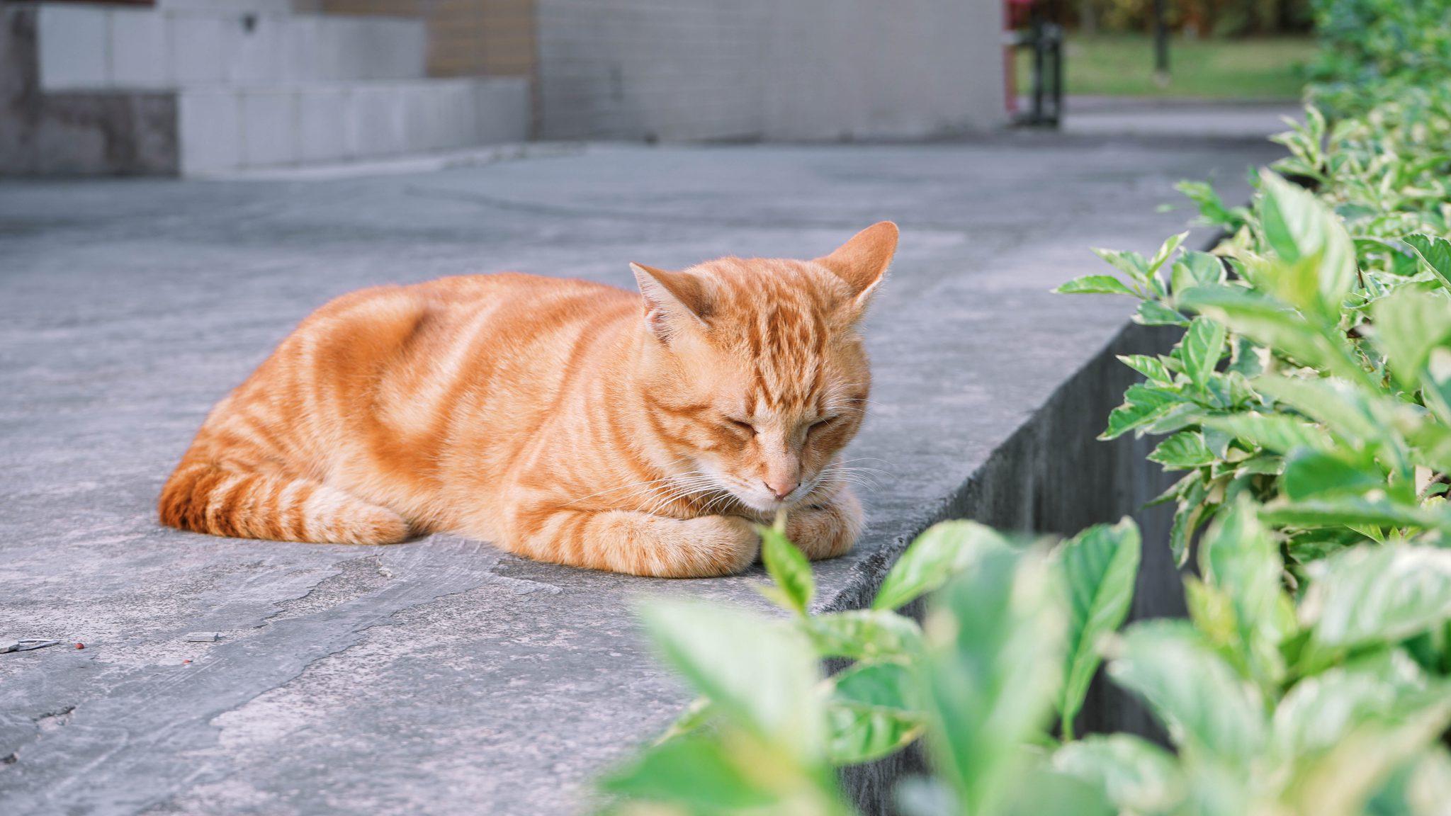 고양이 잃어버렸을 때