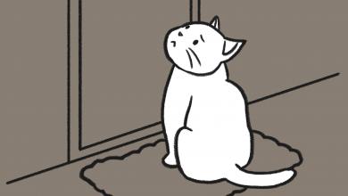 고양이 버림